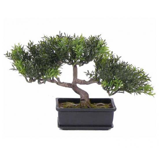 Bonsai boompje 23 cm