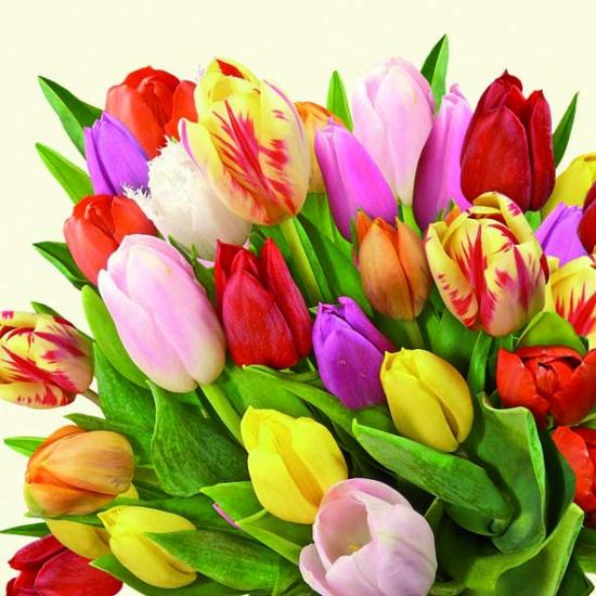 Hollandse tulpen servetten 20x