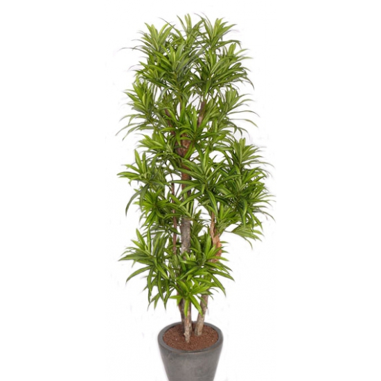 Kunst dracena reflexa plant 120 cm