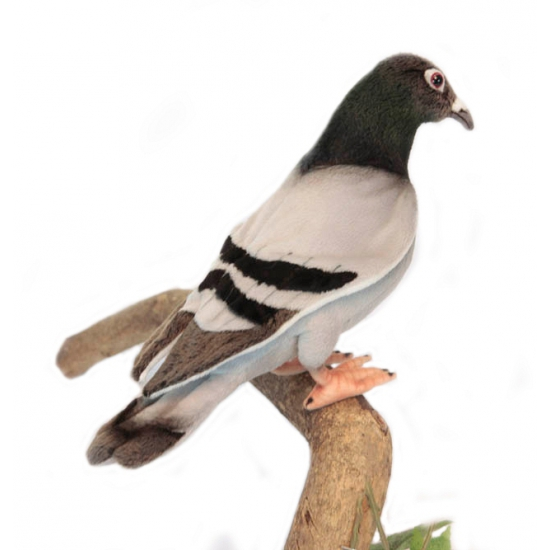 Levensechte knuffel duif 29 cm