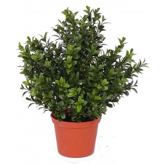 Nep buxus in pot 31 cm