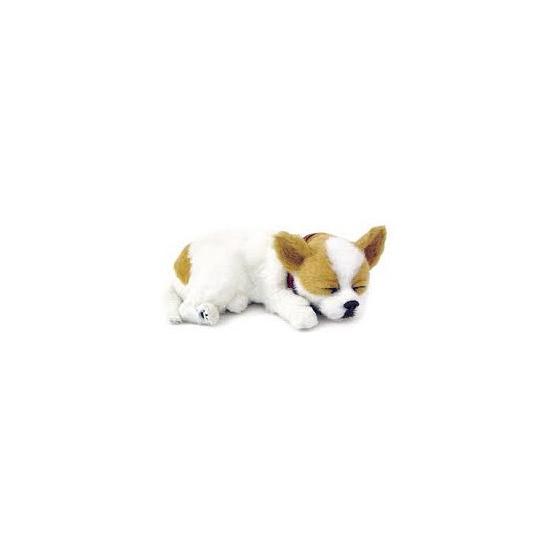 Slapende realistische knuffel Chihuahua